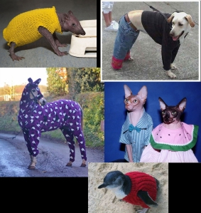 amimals wearing clothes